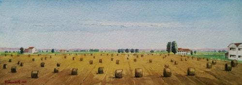 Campo di grano nel veneziano